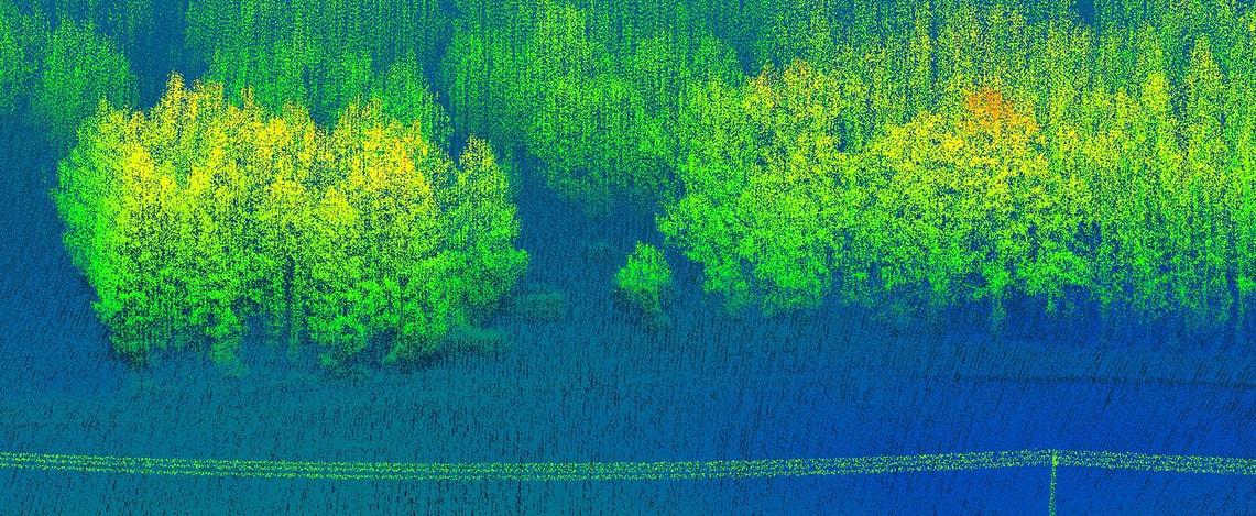 3D-LiDAR Laserscan von einem Waldstück in Deutschland in nördlicher Ausrichtung.